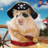 Telegram channel hamsterdaochat